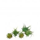 Mini succulents Pick, height 8-12cm, 4 motives, 12